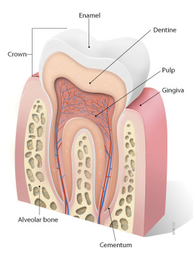 Common issues in paediatric oral health - BPJ 27 April 2010