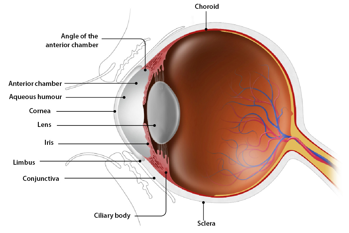 Causes Complications And Treatment Of A Red Eye Bpj Issue 54