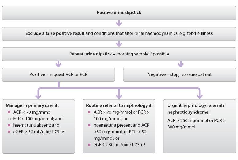Figure 2 Investigating Urine Dipstick Positive For Proteinuria In Primary Care26